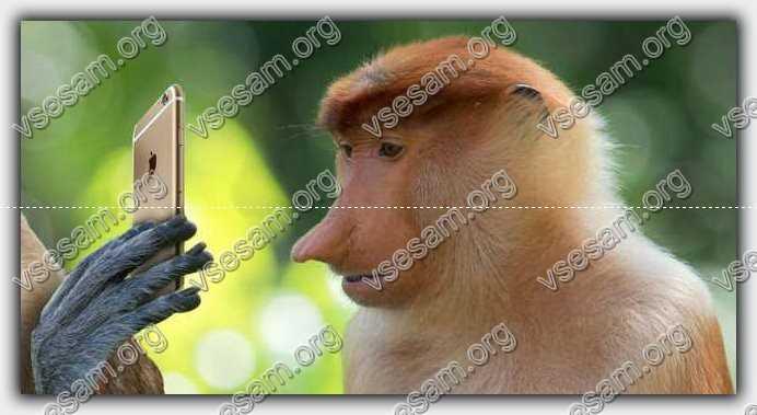 обезьяна нашла айфон 6